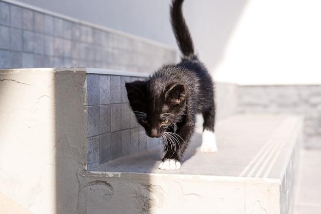 귀여운 흑백 고양이가 거리 계단을 걷습니다.