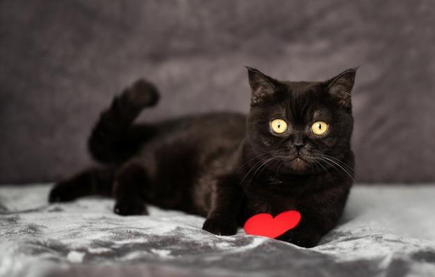 Милый черный кот лежит на кровати с красным сердцем