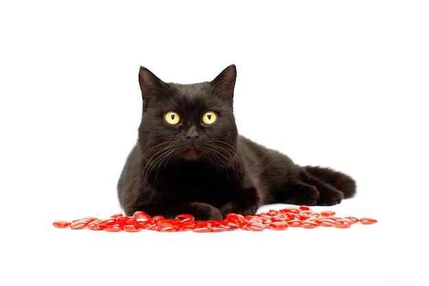 かわいい黒猫は、その足に赤いハートの形をした白い背景の上に横たわって、カメラ、クローズアップの肖像画をのぞきます。愛の概念