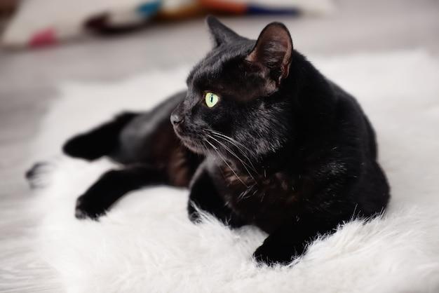 Cute black cat lying on plaid at home