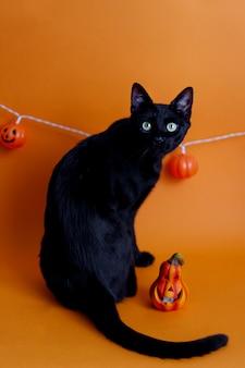 不気味なハロウィーンのカボチャとオレンジ色の背景にかわいい黒猫。ハロウィーンの装飾