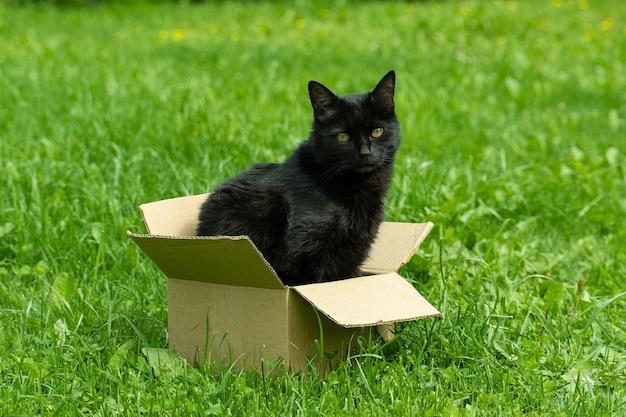 Милый черный кот сидит в картонной коробке на траве