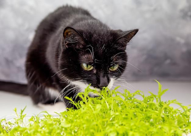 Cute black cat sniffs small green plants