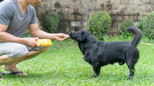 Cute black dog waiting for feeding from man