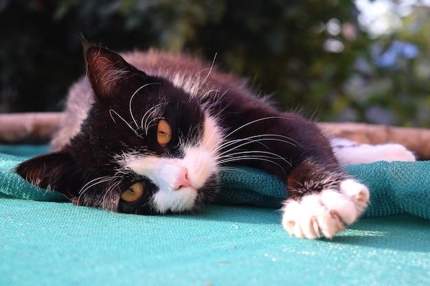 Cute black kitten sleeping on the street