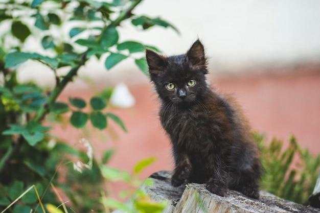 緑の牧草地を歩いているかわいい黒い子猫。花とフィールドに座っている小さな子猫。