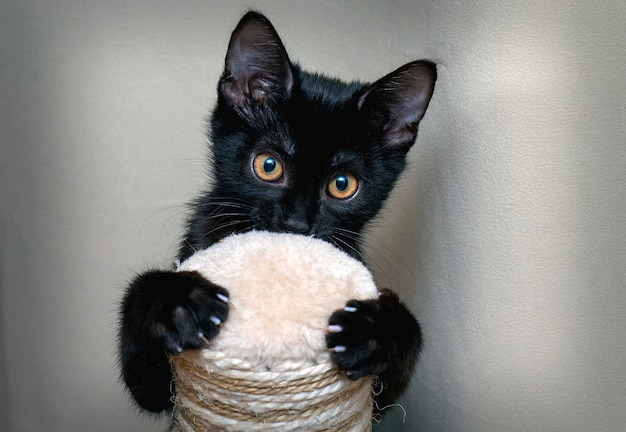 Cute black kitty in front of camera