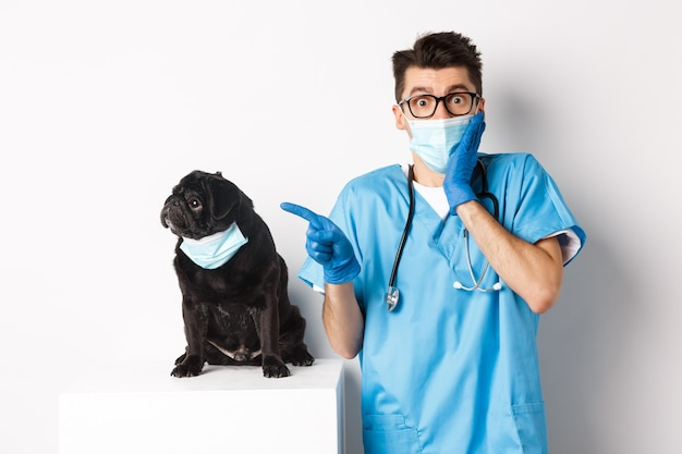 Cute black pug dog in face mask looking left at promo banner while doctor in veterinarian clinic pointing finger, standing over white background