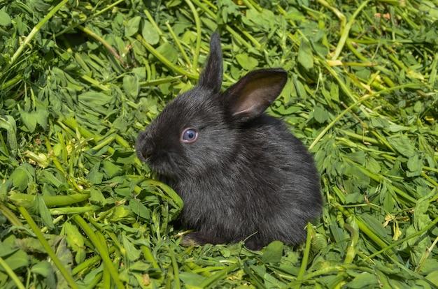 Cute black rabbit