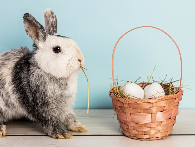 Cute black and white bunny eating hay next to a straw pink basket filled with easter eggs over a wooden table with blue background