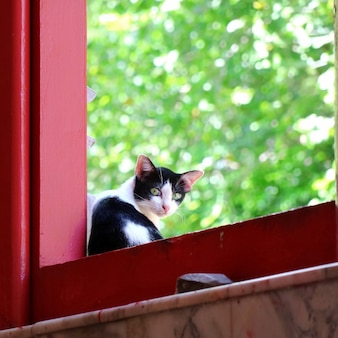 A cute black and white cat sitting at the window and looking wonder with green leaves background. soft focus. animal concept.