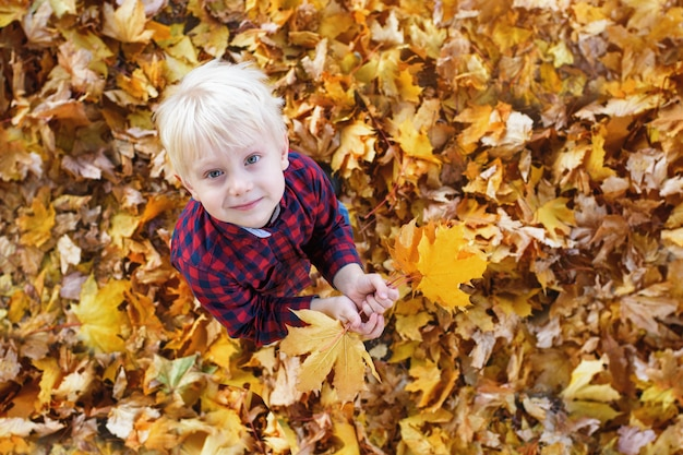 Cute blond boy stands in a autumn leaves and looks up. top view. autumn concept