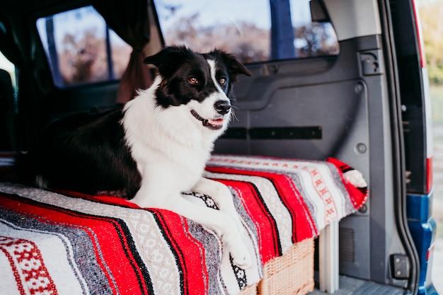 バンでくつろぐかわいいボーダーコリー犬。旅行のコンセプト
