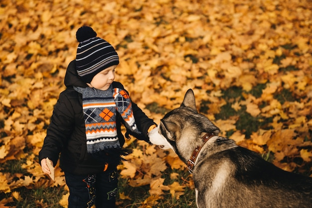 Cute boy in yellow leaves of autumn park playing with husky dog