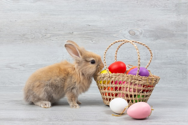 Cute brown baby rabbit and basket of colorful easter eggs on wooden background.