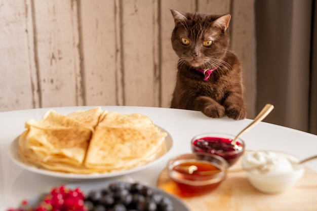 Cute brown cat looking at appetizing homemade pancakes on plate with fresh berries, jam, honey and sourcream on table
