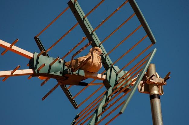 Милый коричневый голубь сидит на антенне