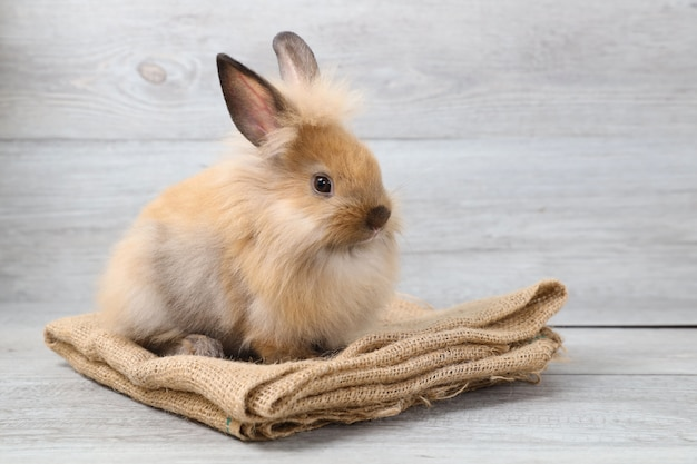 Cute brown easter bunny rabbit on sackcloth