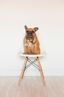 Милый коричневый французский бульдог сидя на стуле дома. ношение ветеринарного стетоскопа. уход за домашними животными и концепция ветеринара