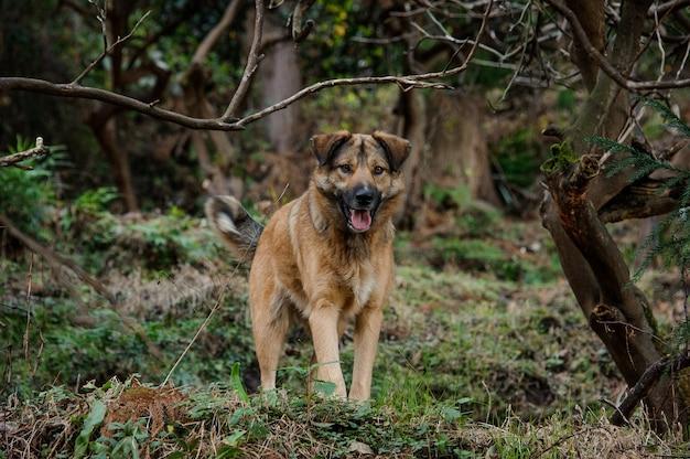 緑の森に舌を出したかわいい茶色のジンジャー犬