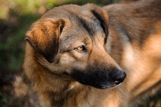 よそ見かわいい茶色の生姜ホームレス犬