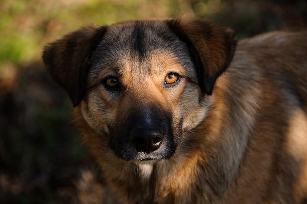 かわいい茶色の生姜ホームレス犬