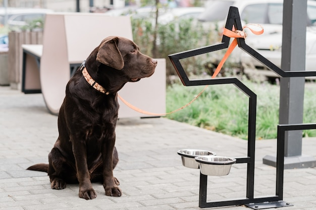 Симпатичный коричневый лабрадор сидит на улице у двух мисок и ждет, пока хозяин накормит его