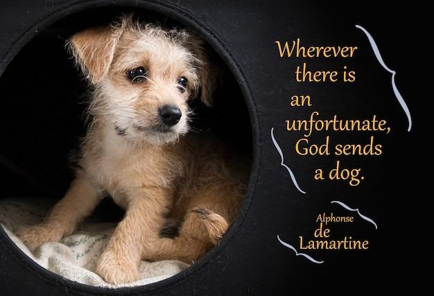 검정 위에 lamartine 인용문을 보여주는 귀여운 갈색 강아지