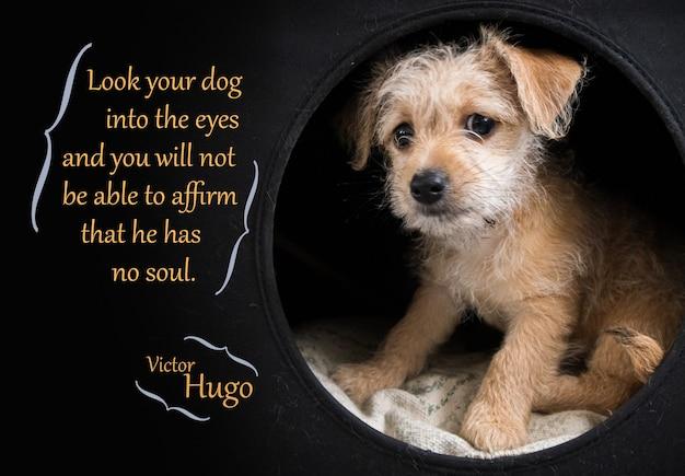 검정 위에 빅토르 위고 인용문을 보여주는 귀여운 갈색 강아지