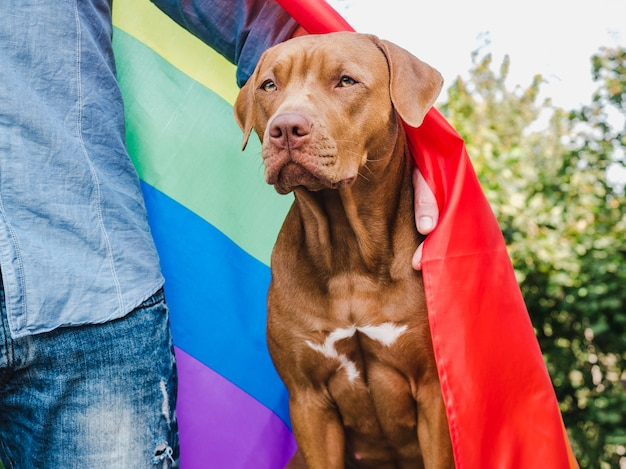 Cute brown puppy with rainbow lgbt flag