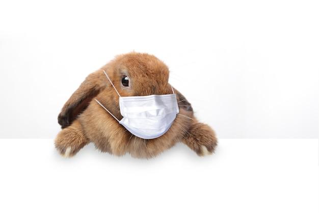 마스크를 쓰고 귀여운 갈색 토끼