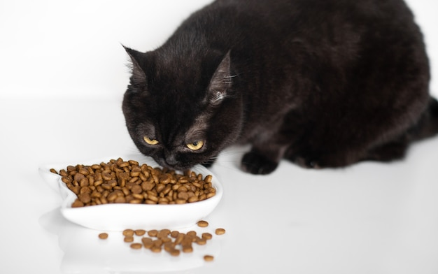 Cute brown scottish cat eats dry food on the kitchen floor, close-up