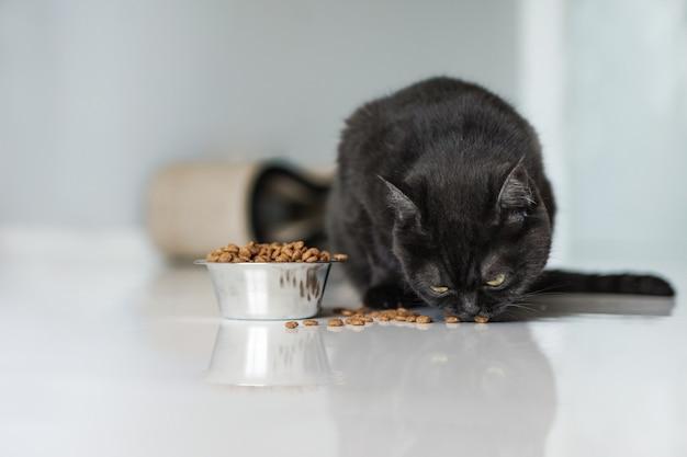 Милый коричневый шотландский кот ест сухую пищу на кухне на полу, крупным планом