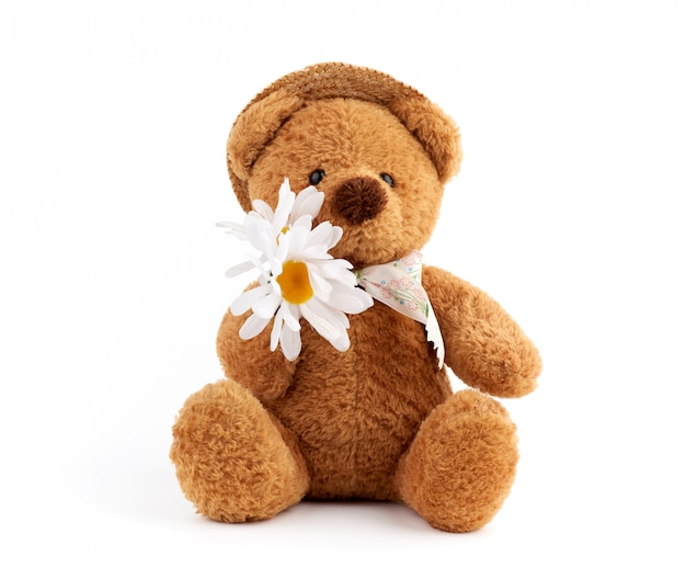 Cute brown teddy bear in a straw hat holds a white daisy