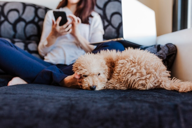 Cute brown toy poodle with her young woman owner at home, on the sofa, daytime