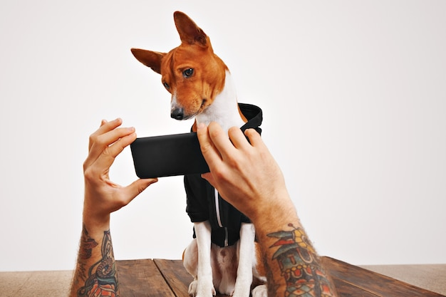 A cute brown and white dog tilts his head watching a video on smartphone screen