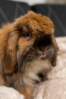 귀여운 토끼 실내