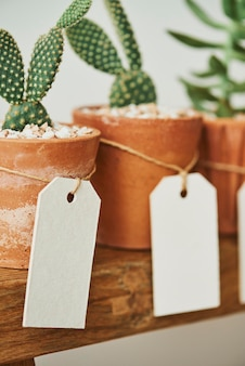 Cute cacti in terracotta pots with blank paper labels