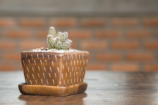Cute cactus pot . small cactus on wooden table in house.