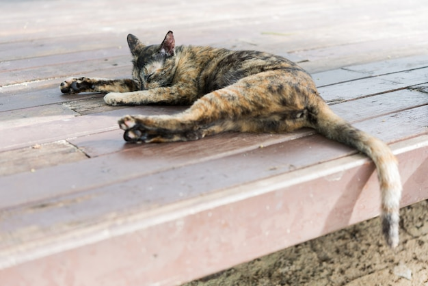 A cute calico cat sleep on wooden floor outdoors