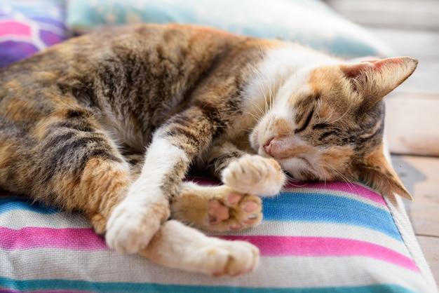 クッションで寝ているかわいい三毛猫
