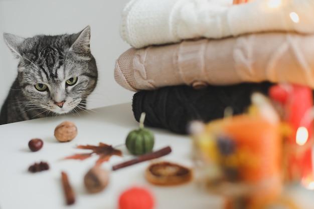 Милый кот и осенний натюрморт с тыквой и свитерами на уютном фоне