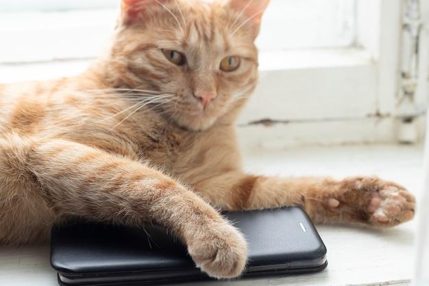 Cute cat answering the phone on windowsill, horizontal