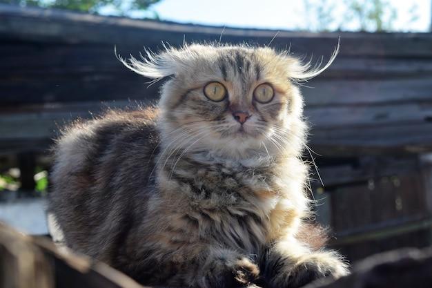 Cute cat close up background