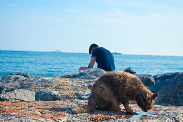 Милый кот пьет воду и человек сидит за ним на скалах у моря