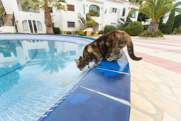Милый кот пьет воду из бассейна
