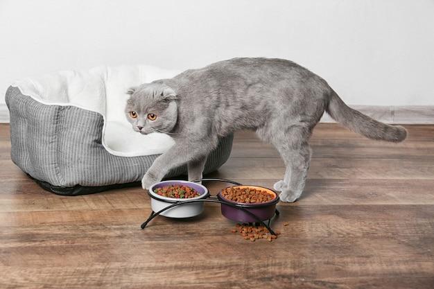 Милый кот ест на деревянном полу