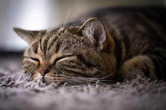 Cute cat  Happy Smile  Pets sleeping