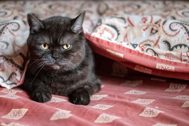 침실의 침대에 담요 아래에 숨어있는 귀여운 고양이