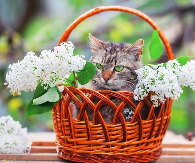 屋外の白いライラックの花とバスケットのかわいい猫
